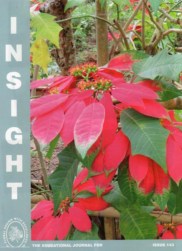 nafas insight magazine